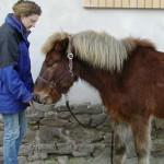 Ponyfütterung