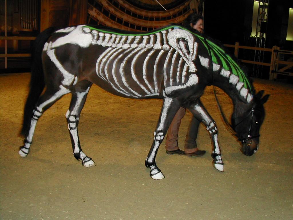 Chiro Pferd 1