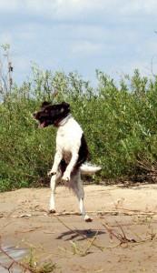 Hund-in-Luft